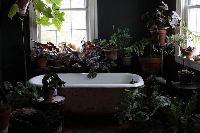 aranżacja kwiatowa w łazience