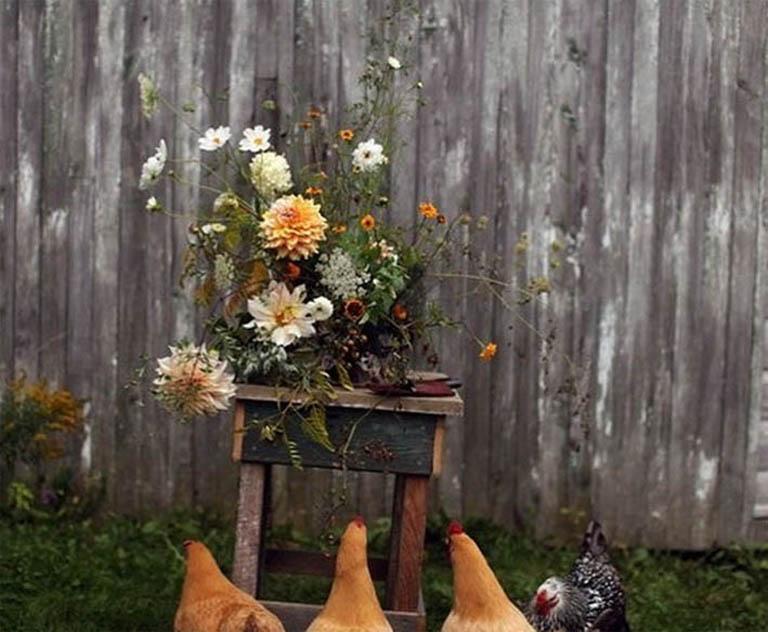 wieś i kury